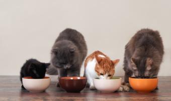 meilleure nourriture pour chat