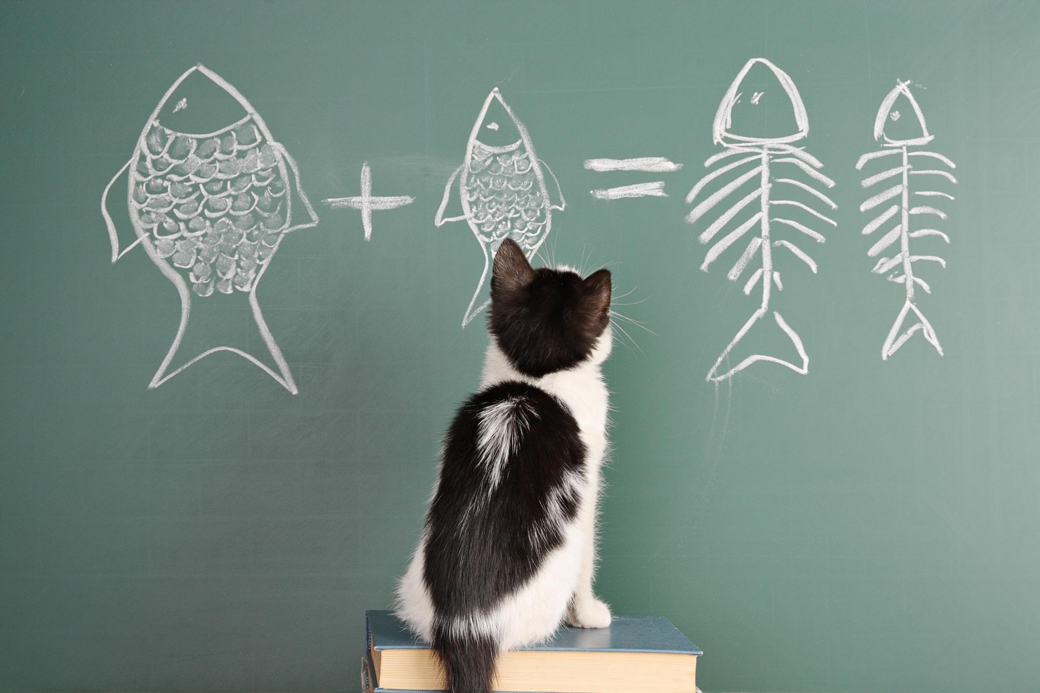 chat intelligent, comptage de chat, intelligence de chat