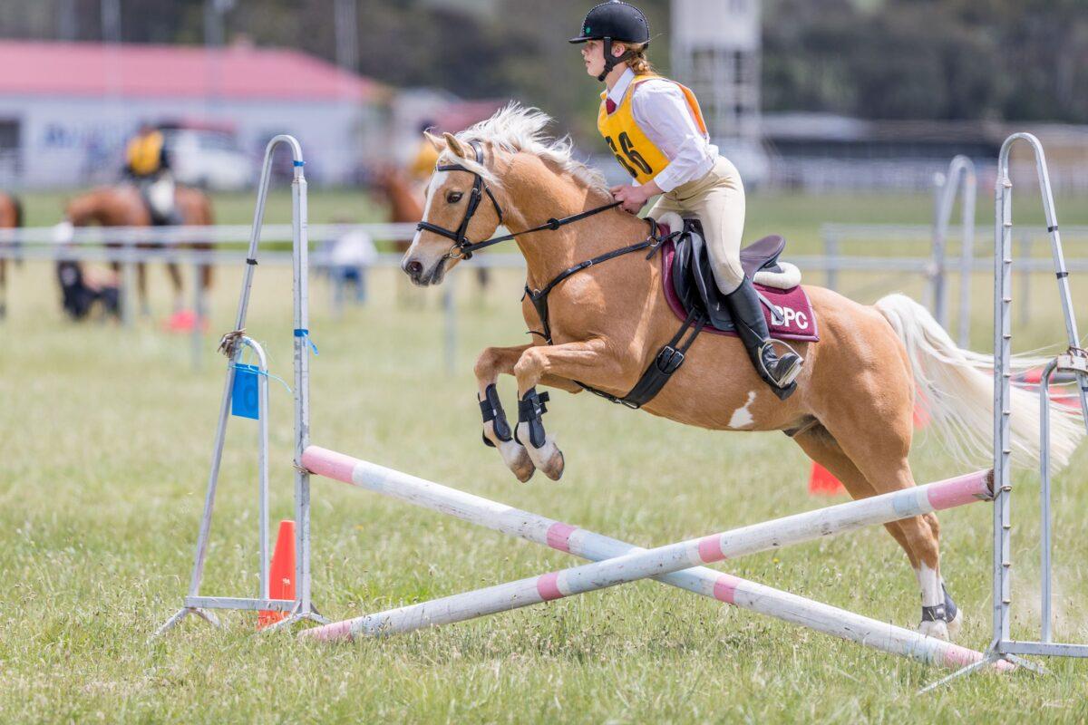 chevaux-poney-quelle-est-la-difference-15