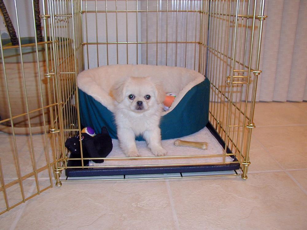 formation de caisse de chien